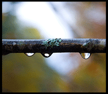 raindrops-on-a-branch
